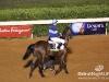 beirut_horse_race_125