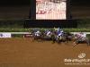 beirut_horse_race_128