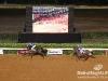 beirut_horse_race_129