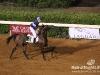 beirut_horse_race_130
