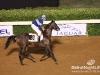 beirut_horse_race_131