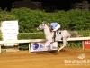 beirut_horse_race_160