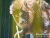 Florilegio_Italian_Circus026