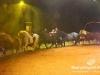 Florilegio_Italian_Circus179