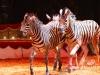 Florilegio_Italian_Circus211