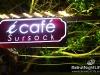 ecafe_sursock_18