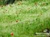 Bekaa_Nature_Lebanon04