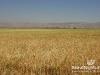 Bekaa_Nature_Lebanon10