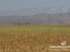 Bekaa_Nature_Lebanon22