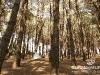 Bekaa_Nature_Lebanon28