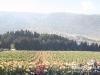 Bekaa_Nature_Lebanon30