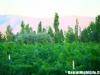 massaya_winery_01