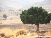 north_lebanon65