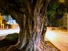 Downtown_tree11