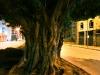 Downtown_tree12