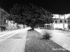 Downtown_tree4
