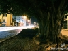 Downtown_tree6