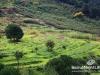 fanar-touristic-028