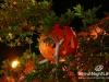 halloween-amethyste-phoenicia-011