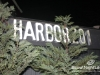 harbor201_nye_01