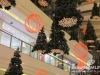 Lighting-of-the-christmas-tree-at-city-centre_2