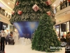 Lighting-of-the-christmas-tree-at-city-centre_22