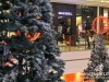 Lighting-of-the-christmas-tree-at-city-centre_4