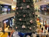 Lighting-of-the-christmas-tree-at-city-centre_7