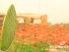 saidoun-jezzin-touristic-047