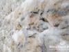 snow-cedars-bcharre-lebanon-01