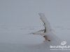 snow-cedars-bcharre-lebanon-04