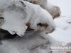 snow-cedars-bcharre-lebanon-05