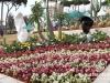 garden-show-beirut-201220