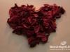 valentine-le-gray-24