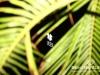 veer-farewell-summer-107