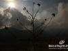 sunday-bbq-rikkys-30