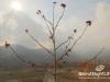 sunday-bbq-rikkys-31